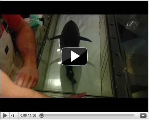 Tuna on a Treadmill Video